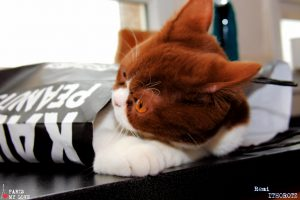 CHOCOLAT découvre le sac papier